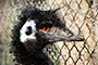 Emu 2009