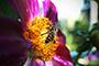 Hapbee