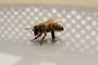 Kristmas Bee
