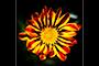 Fallopian Flower